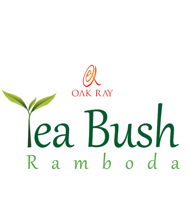 Oak Ray Tea Bush - Ramboda